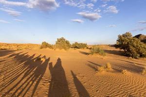 Kamel Silhouetten foto