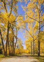 schöne Herbstszene mit bunten Bäumen