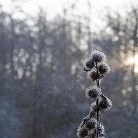 Schneeszene mit Pflanze foto