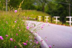 Landschaftsblumen foto