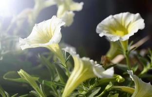 schöne Blumen foto