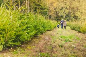 glückliche Familie mit Kind, das Weihnachtsbaum am Bauernhof wählt
