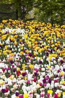 Blumengarten foto