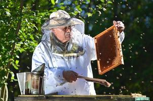 erfahrener Imker, der nach der Sommersaison Inspektionen im Bienenhaus durchführt foto