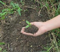 Hände halten eine kleine grüne Pflanze foto