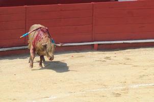 kämpfender Stier in der Stierkampfarena