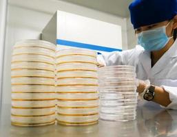Wissenschaftler behandelt mehrere Gerichte in gelbem Kulturmedium foto