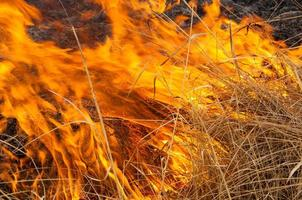 brennendes Schilf. Feuer foto