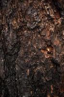 Textur der verbrannten Holzrinde