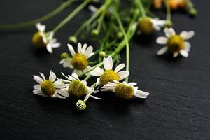 Kamillenblüten auf schwarzem Hintergrund