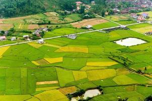 Reisfeld in der Erntezeit in Bac Son Valley, Lang Son, Vietnam