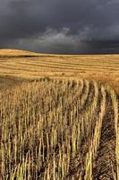 Gewitterwolken Saskatchewan