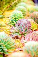 tropischer Garten foto