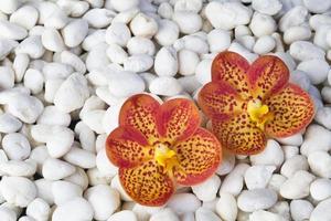 Steine und Orchideen foto
