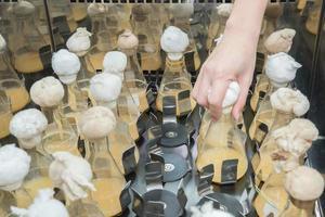 Kulturkolben im Labor-Reagenzglasschüttler