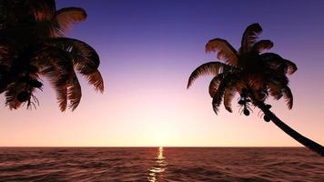 Kokosnüsse am Strand. foto