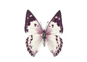 bunter Schmetterling. isoliert auf weißem Hintergrund