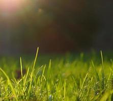 im Sonnenlicht wachsen foto