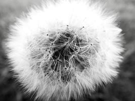 Wishflower Super Makro foto