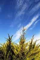 Ast mit blauem Himmel Hintergrund foto