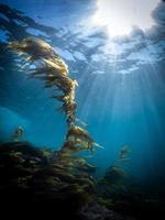 Sunburst Riff Seetang Laguna Strand unter Wasser foto