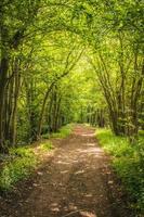 Fußweg durch Wald foto
