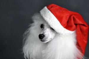 Weihnachtsmann Hund foto