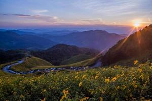 mexikanisches Sonnenblumenfeld. foto