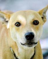 Blindenhunde zum Essen foto