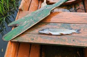 gefangener Hecht liegt in einem Fischerboot foto