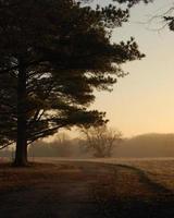 Die Morgendämmerung erwacht foto