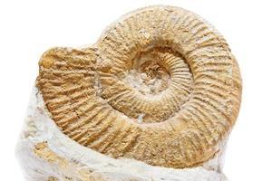 alte Muschel auf einem weißen Hintergrund foto