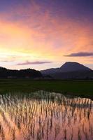 Reisfeld und Sonnenuntergang