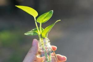 Pflanze in der Flasche