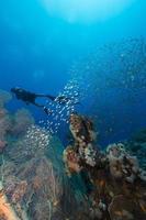 Taucher und das Wasserleben im Roten Meer. foto