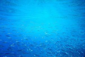unter Wasser fischen foto