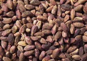 ungeschälte Pistazien Erdnüsse arrangiert als Hintergrund foto