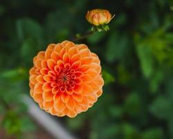 Herbstkürbisse und Kürbisse foto