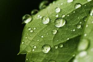 grünes Blatt mit Wassertropfen