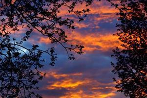 surreale Dämmerung durch Äste: dramatischer, von Sonnenuntergang hinterleuchteter Baum