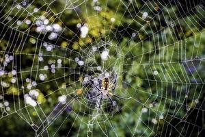 Spinne foto