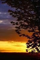 Dämmerung durch Äste: dramatischer Sonnenuntergang hinterleuchteter Baum foto