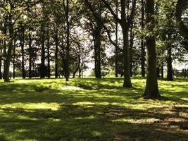 Wald von Bäumen foto