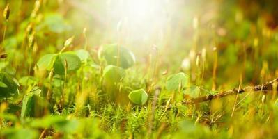 launischer Wald als Hintergrund foto