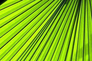 Palmblatt von hinten mit Sonnenlicht beleuchtet foto