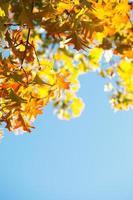 Ahornblätter über dem blauen Himmel foto