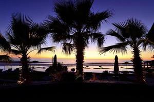 Palmenschattenbild mit Sonnenuntergang foto