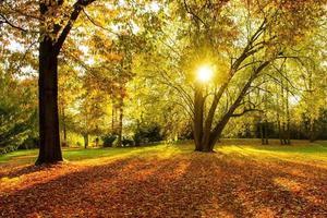 Herbst - von hinten beleuchtet foto