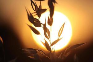 hintergrundbeleuchtete Gräser foto