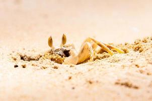 Nahaufnahme der Krabbe, die ein Loch in den Sand gräbt foto